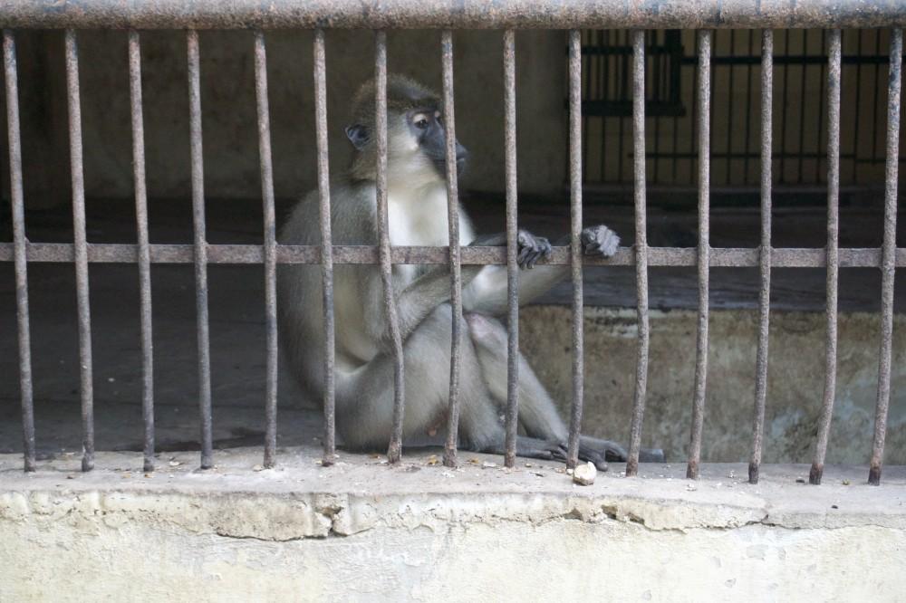 monkey 5