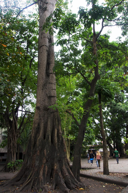 poto trees2